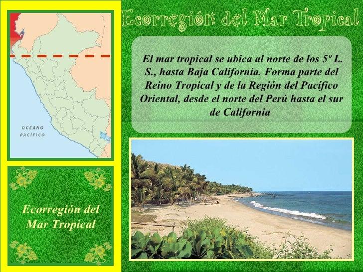 El mar tropical se ubica al norte de los 5º L. S., hasta Baja California. Forma parte del Reino Tropical y de la Región de...