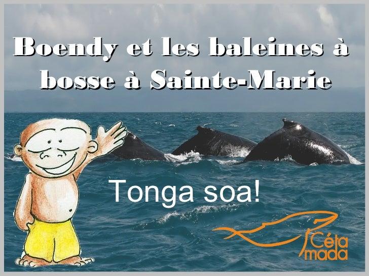 Boendy et les baleines à bosse à Sainte-Marie      Tonga soa!