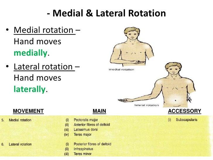 Rotation movement anatomy 2366701 - follow4more.info