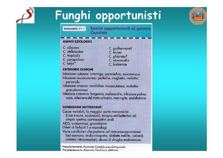 Funghi opportunisti