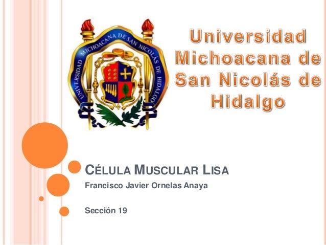 20. celula muscular lisa