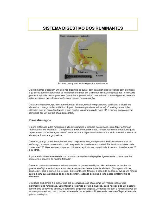 SISTEMA DIGESTIVO DOS RUMINANTES Etrutura dos quatro estômagos dos ruminantes Os ruminantes possuem um sistema digestivo p...