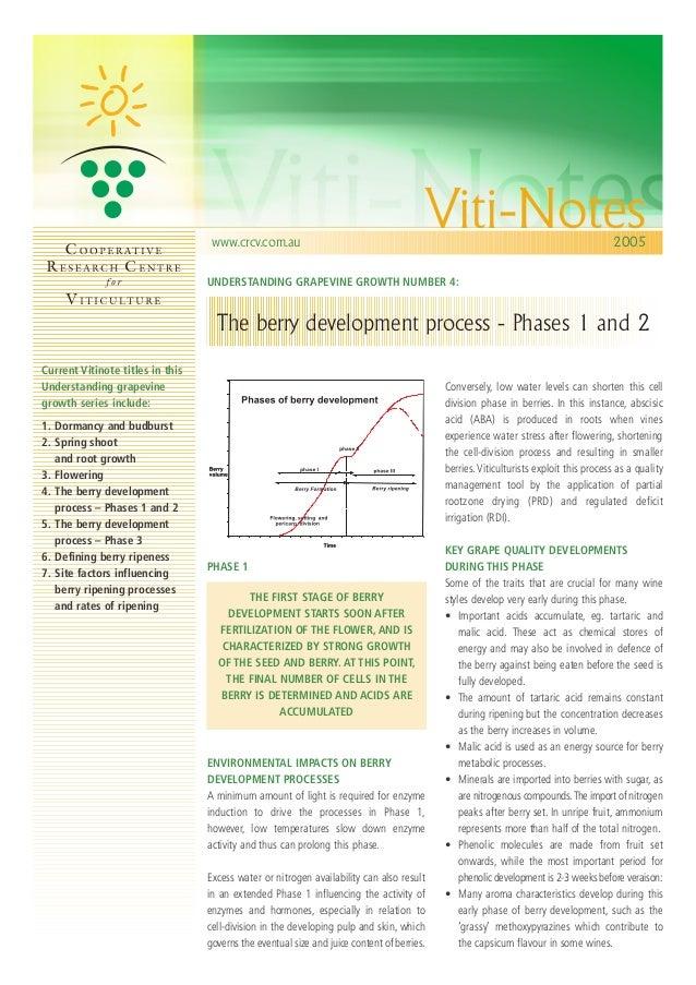 berry-development-process-i-ii