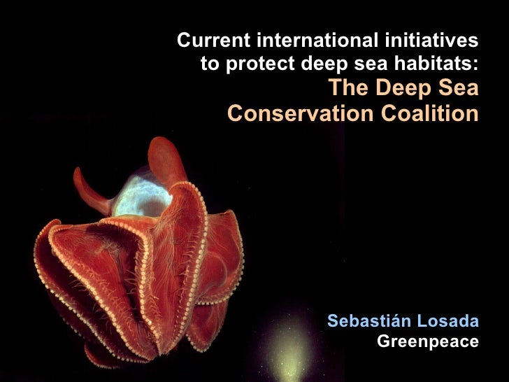 Initiatives to Protect the Deep Sea