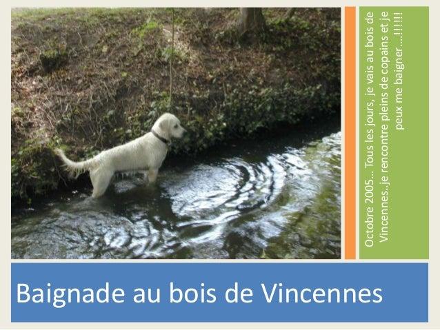 Octobre 2005… Tous les jours, je vais au bois de  Vincennes..je rencontre pleins de copains et je  peux me baigner….!!!!!!...