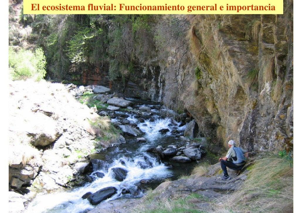 El ecosistema fluvial: Funcionamiento general e importancia