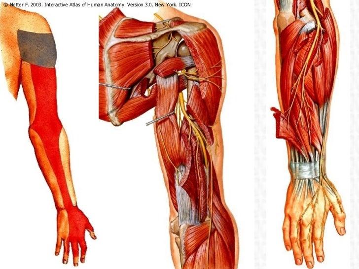Atlas Of Human Anatomy 5th Edition Pdf Free Download