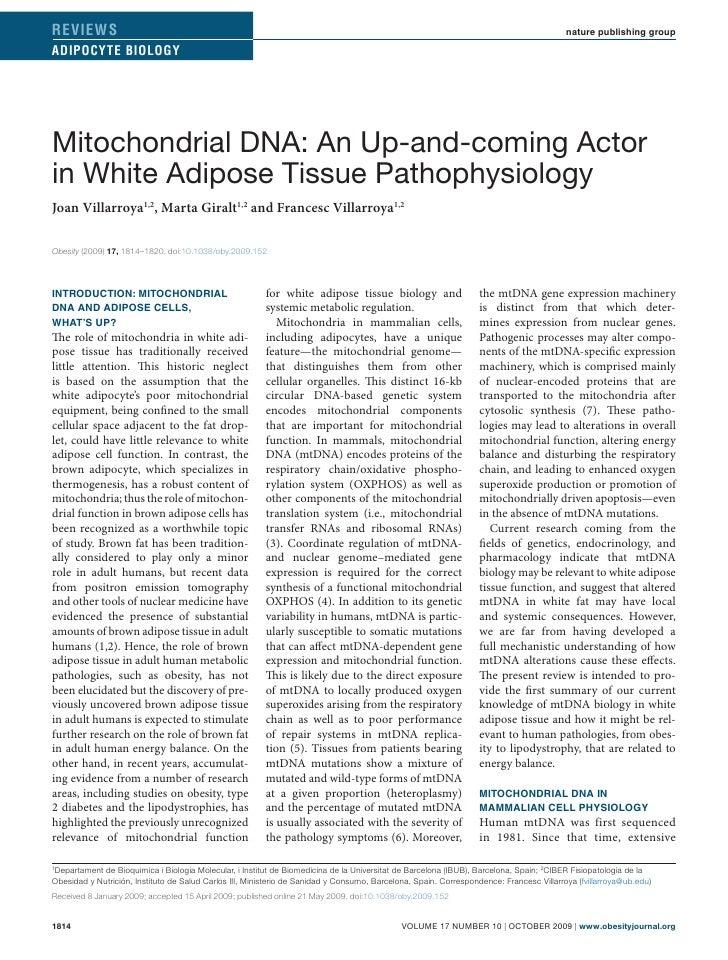 2009 Mitocondriopatia Obesity