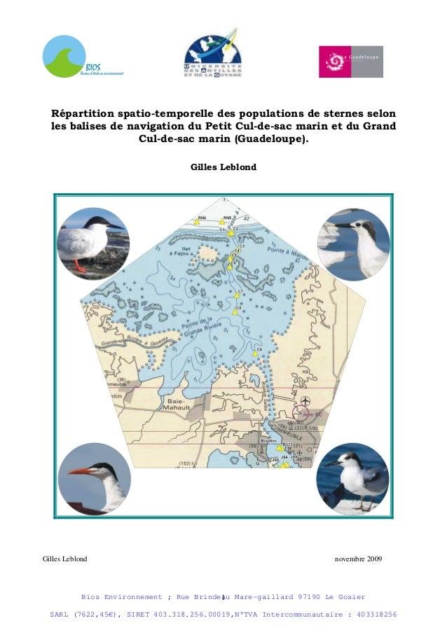 Répartition spatio-temporelle des populations de sternes selon  les balises de navigation du Petit Cul-de-sac marin et du ...