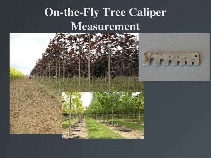 On-the-Fly Tree Caliper Measurement<br />
