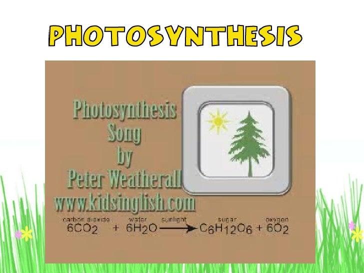 20100906140910 presentation1 photosynthesis