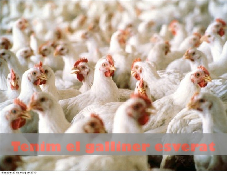 Tenim el galliner esverat dissabte 22 de maig de 2010