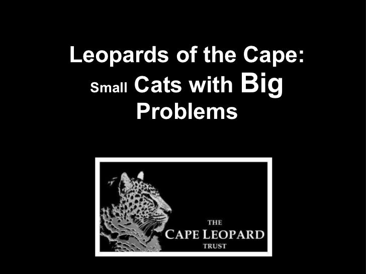 Leopards of the Cape: Small  Cats with  Big  Problems