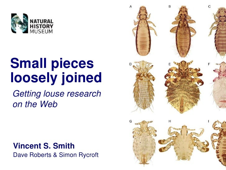 Small pieces loosely joined Getting louse research on the Web    Vincent S. Smith Dave Roberts & Simon Rycroft