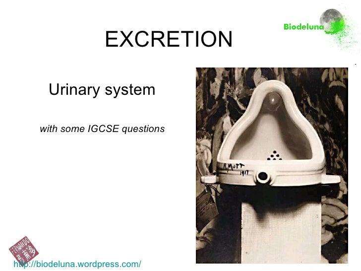 2010 Urinary System- Igcse