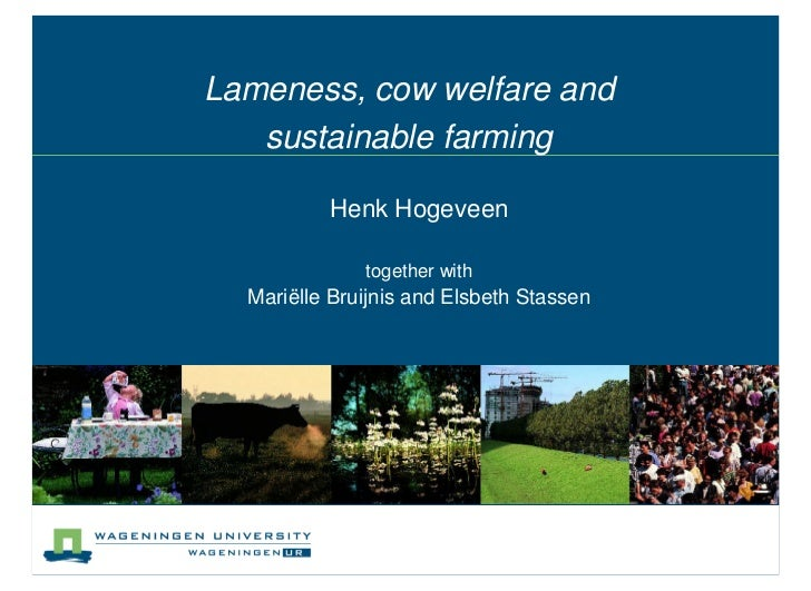 Lameness, cow welfare and   sustainable farming          Henk Hogeveen              together with  Mariëlle Bruijnis and E...