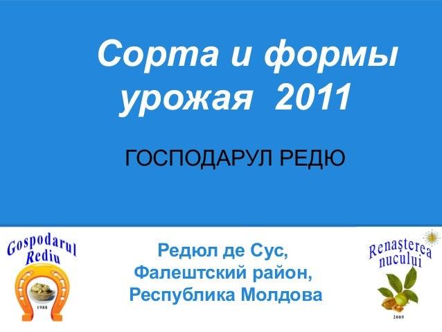 Сорта и формы урожая 2011 ГОСПОДАРУЛ РЕДЮ    Редюл де Сус, Фалештский район, Республика Молдова