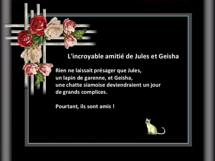 L'incroyable amitié de JulesetGeisha Rien ne laissait présager que Jules,  un lapin de garenne, et Geisha,  une chatte s...