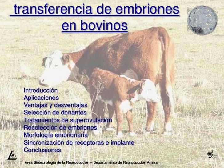 Transferencia de Embriones en bovinos