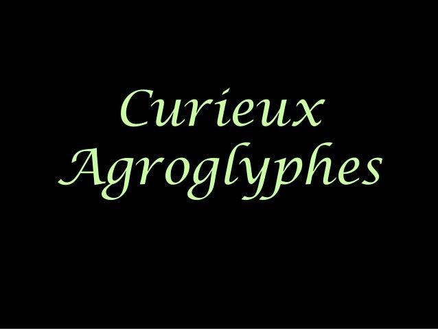 Curieux Agroglyphes