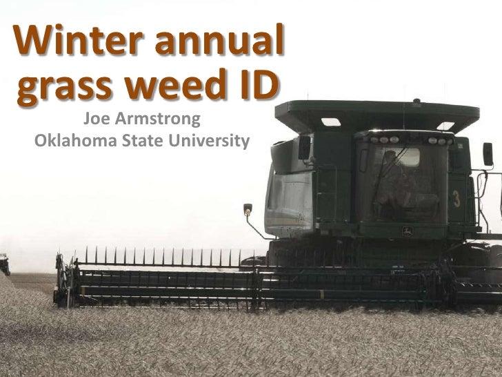 2011 grass weed id web