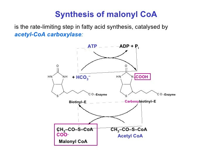 Acetyl-coa Carboxylase Deficiency by Acetyl-coa Carboxylase
