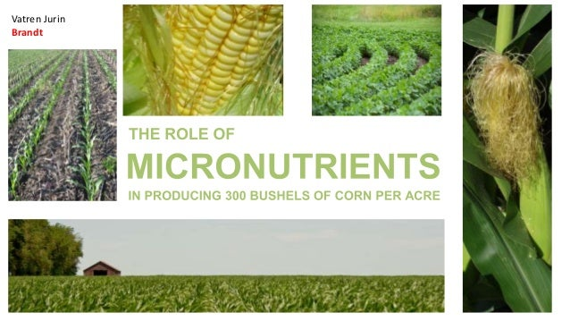 the role of corn in our What is the role of our supermarkets  raises alarm bells regarding the role of supermarkets as distributors of good food  any products with corn,.