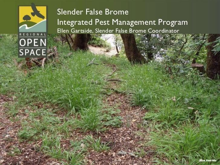 Ellen Gartside Slender False Brome Integrated Pest Management Program Ellen Gartside, Slender False Brome Coordinator