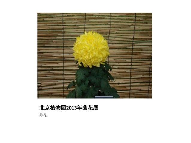 北京植物园2013年菊花展 菊花