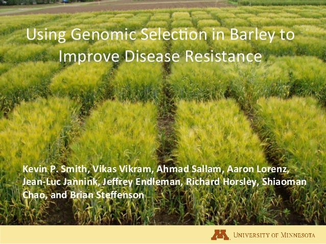 Using	   Genomic	   Selec.on	   in	   Barley	   to	    Improve	   Disease	   Resistance	    Kevin	   P.	   Smith,	   Vikas...