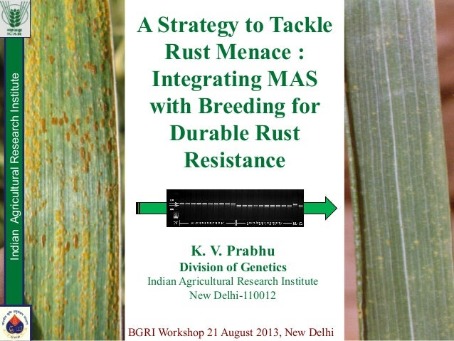 A Strategy to Tackle Rust Menace : Integrating MAS with Breeding for Durable Rust Resistance IndianAgriculturalResearchIns...