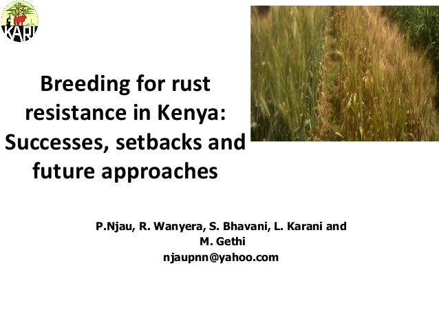 Breeding  for  rust   resistance  in  Kenya:   Successes,  setbacks  and   future  approaches     ...