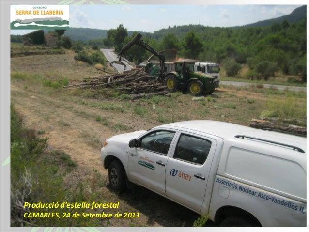20130924 camarles biomassa_produccio_ricard_baques