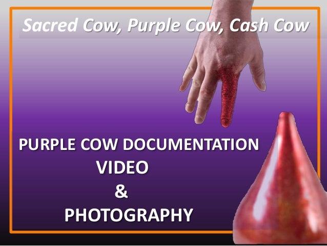 Sacred Cow, Purple Cow, Cash Cow PURPLE COW DOCUMENTATION VIDEO & PHOTOGRAPHY