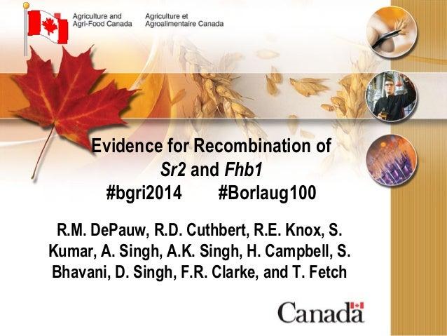 Evidence for Recombination of Sr2 and Fhb1 #bgri2014 #Borlaug100 R.M. DePauw, R.D. Cuthbert, R.E. Knox, S. Kumar, A. Singh...