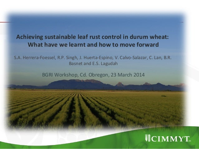 Achieving	   sustainable	   leaf	   rust	   control	   in	   durum	   wheat:	   	    What	   have	   we	   learnt	   and	 ...
