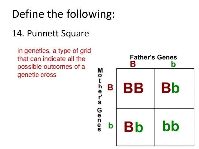 What Is The Purpose Of A Punnett Square