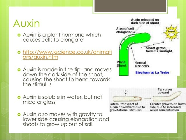Tropism in Plants Worksheets Tropisms Plants Grow in