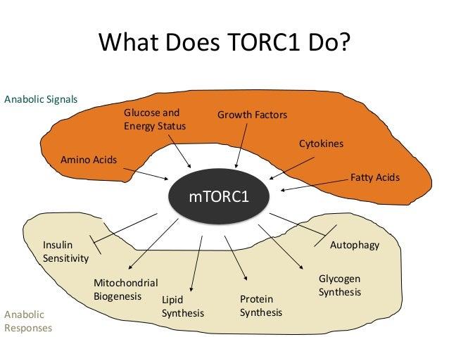 glycogenesis anabolic or catabolic