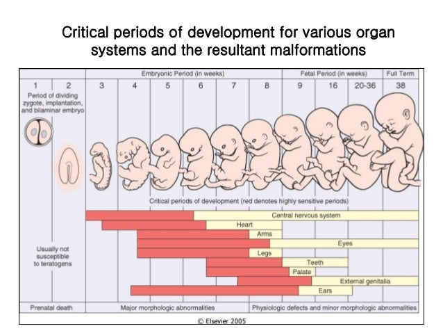 the periods of human prenatal development and the effects of teratogens What are the most sensitive periods for teratogens in pregnancy during the development of a prenatal vitamins, using a microwave to cook food identifying.