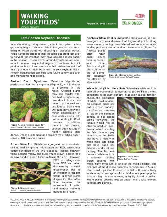 South Dakota Walking Your Fields newsletter-Aug