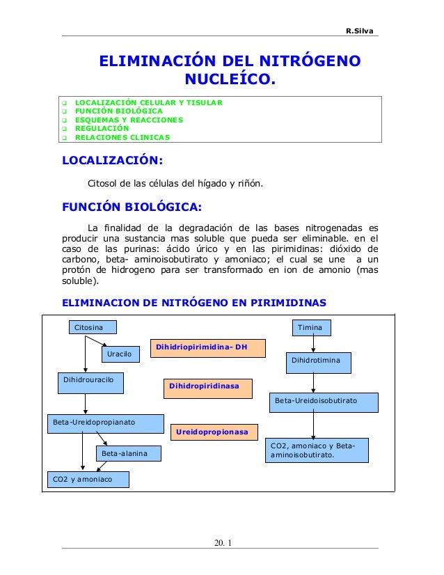 R.Silva ELIMINACIÓN DEL NITRÓGENO NUCLEÍCO.  LOCALIZACIÓN CELULAR Y TISULAR  FUNCIÓN BIOLÓGICA  ESQUEMAS Y REACCIONES ...