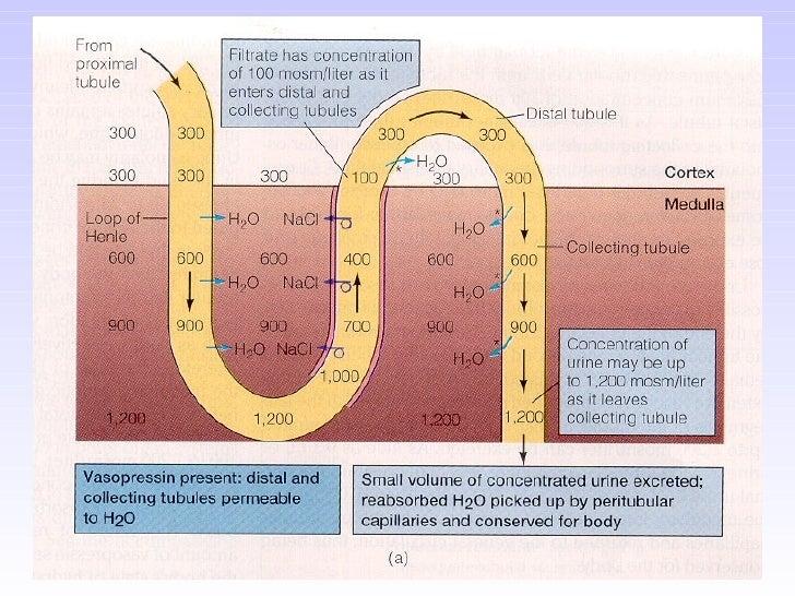 The Endocrine System         VS 223       Dr. Noland