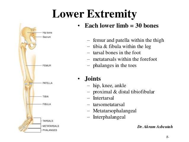 Lower Limb Bones | Car Interior Design