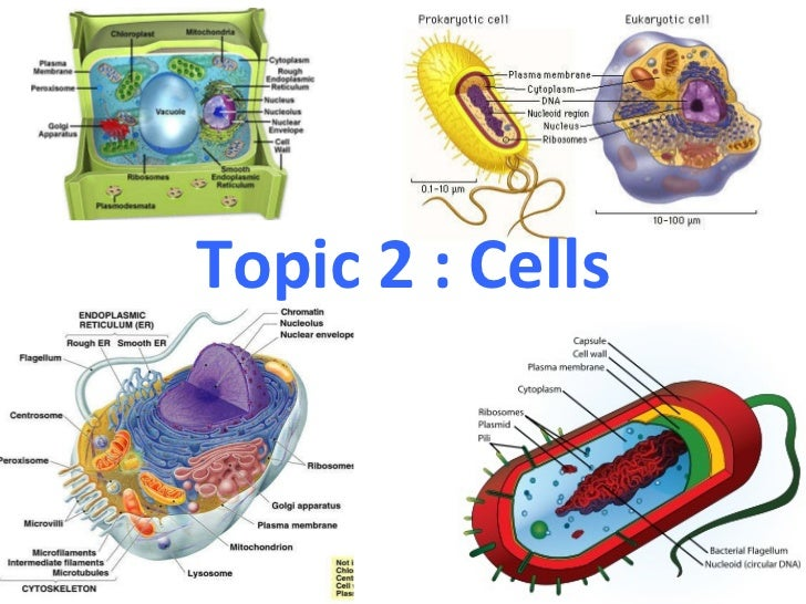 Topic 2 : Cells