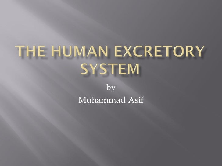 Muhammad Asif deliver lecture on the human-excretory_system