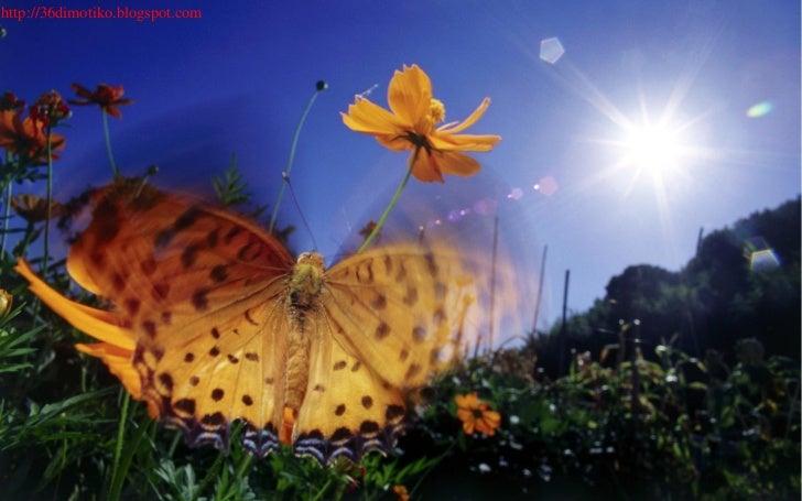 22256582 40-πεταλόυδες-σε-ανάλυση-1920-x-1200