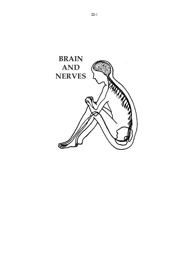 22 brain and nerves