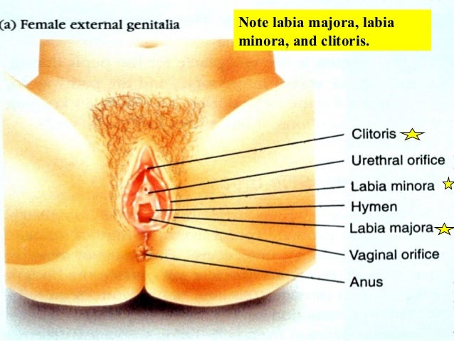 brutal anal penetration