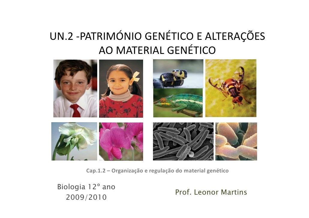 UN.2 -PATRIMÓNIO GENÉTICO E ALTERAÇÕES          AO MATERIAL GENÉTICO             Cap.1.2 – Organização e regulação do mate...